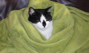 Kat in winterslaap